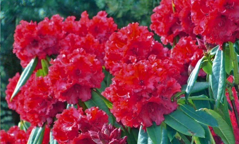 गुराँसको फूल टिप्नेलाई पाँच हजार जरिवाना