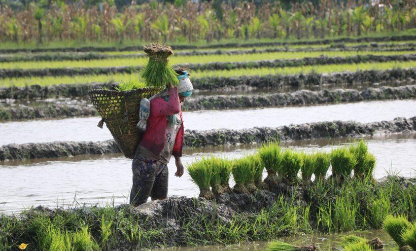 झापाका कृषकलाई दुई करोड अनुदान